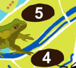 Close-up of part of the trail map, showing a frog illustration