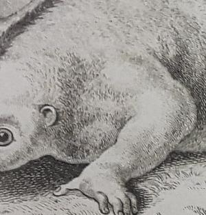 Read more at: Curious wolves and famous fossils: New rare book display