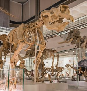 Read more at: Museum of Zoology is opened by Sir David Attenborough