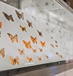 Read more at: Two UK museums tackle the urgent crisis facing insect populations
