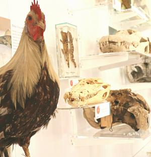 Read more at: New displays show that birds are another kind of reptile