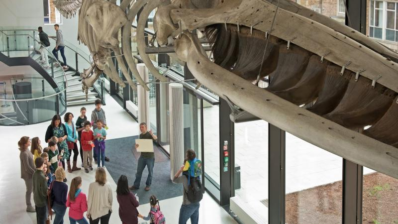 Foyer Museum Zoo : Group visits museum of zoology